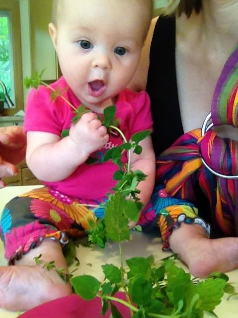 Helping pick herbs