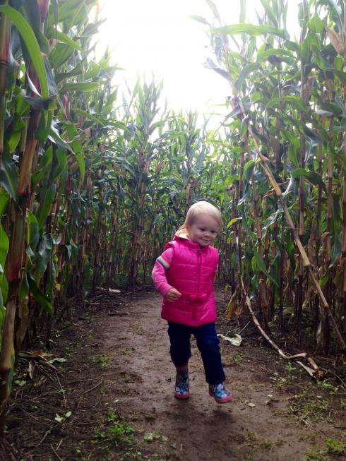 First corn maze