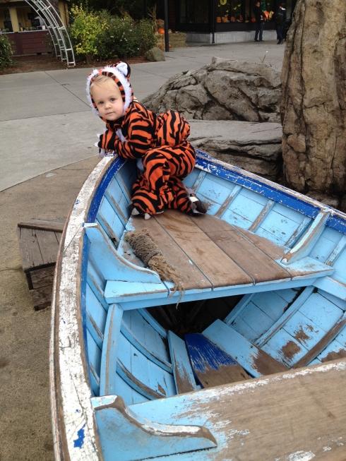 Stowaway tiger
