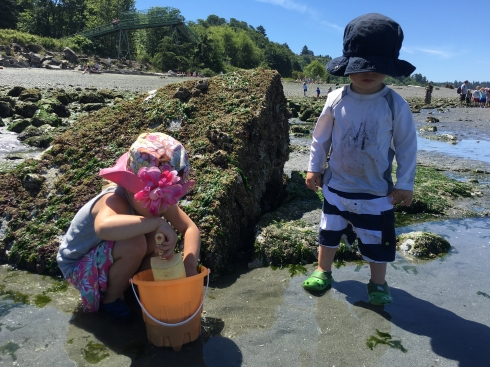 Low tide explorers