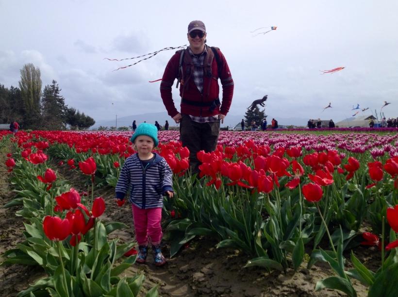 Tulip Town Rocks