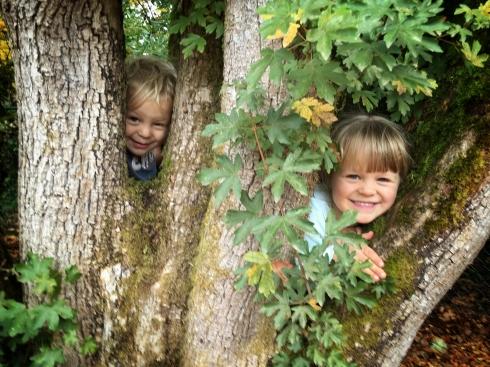 Peekaboo Tree