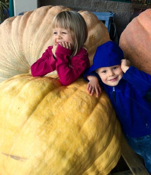 Pumpkin Arrival